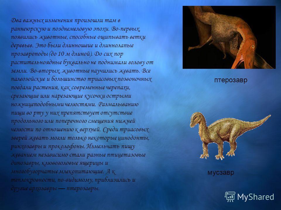 Два важных изменения произошли там в раннеюрскую и позднемеловую эпохи. Во-первых, появились животные, способные ощипывать ветки деревьев. Это были длинношеие и длиннолапые прозавроподы (до 10 м длиной). До сих пор растительноядные буквально не подни