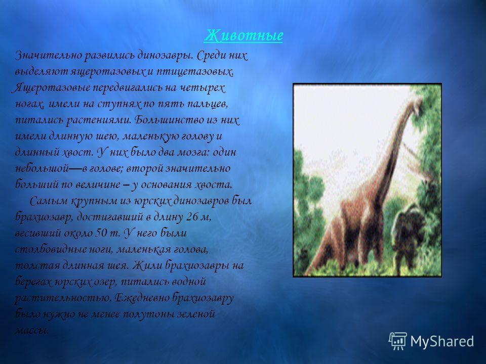 Животные Значительно развились динозавры. Среди них выделяют ящеротазовых и птицетазовых. Ящеротазовые передвигались на четырех ногах, имели на ступнях по пять пальцев, питались растениями. Большинство из них имели длинную шею, маленькую голову и дли