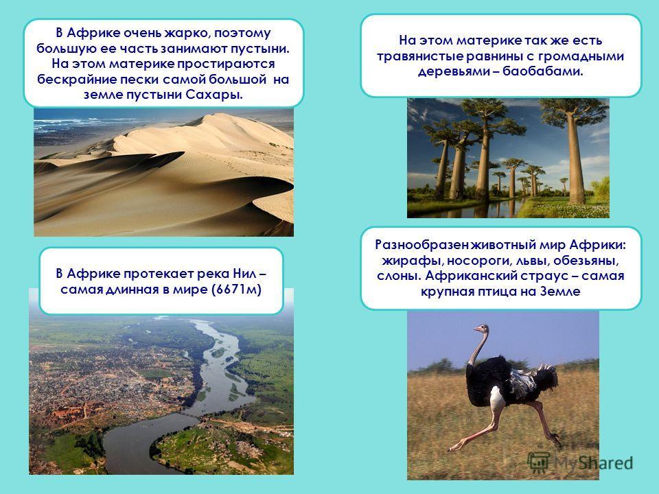 В Африке протекает река Нил – самая длинная в мире (6671 м) Разнообразен животный мир Африки: жирафы, носороги, львы, обезьяны, слоны. Африканский страус – самая крупная птица на Земле В Африке очень жарко, поэтому большую ее часть занимают пустыни.