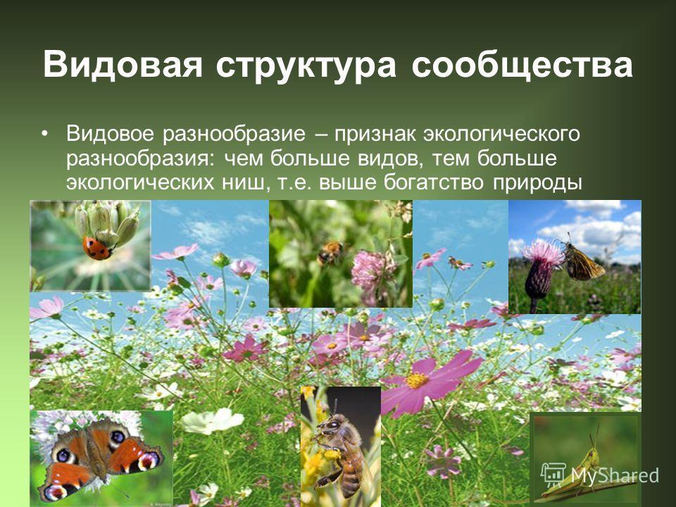 Видовая структура сообщества Видовое разнообразие – признак экологического разнообразия: чем больше видов, тем больше экологических ниш, т.е. выше богатство природы