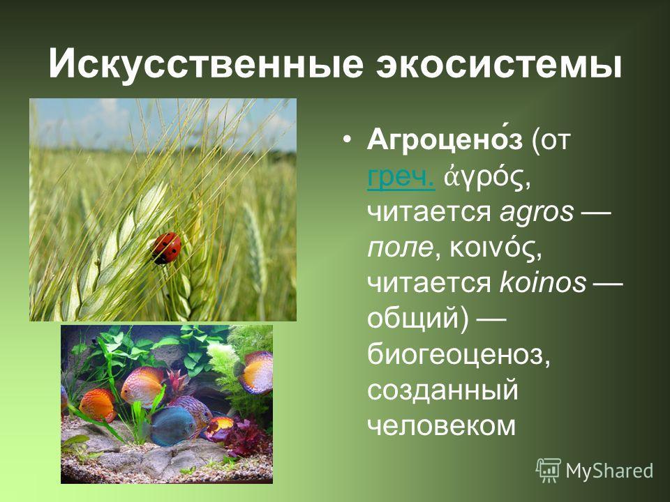 Искусственные экосистемы Агроцено́з (от греч. γρός, читается agros поле, κοινός, читается koinos общий) биогеоценоз, созданный человеком греч.
