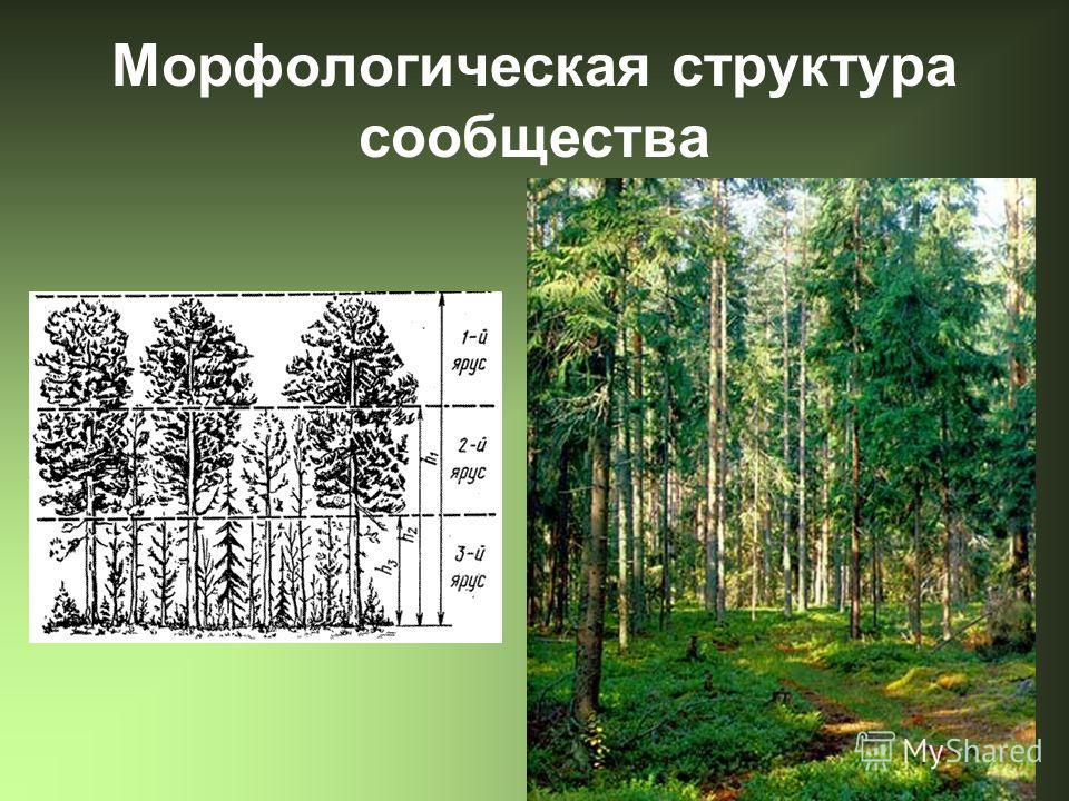 Морфологическая структура сообщества