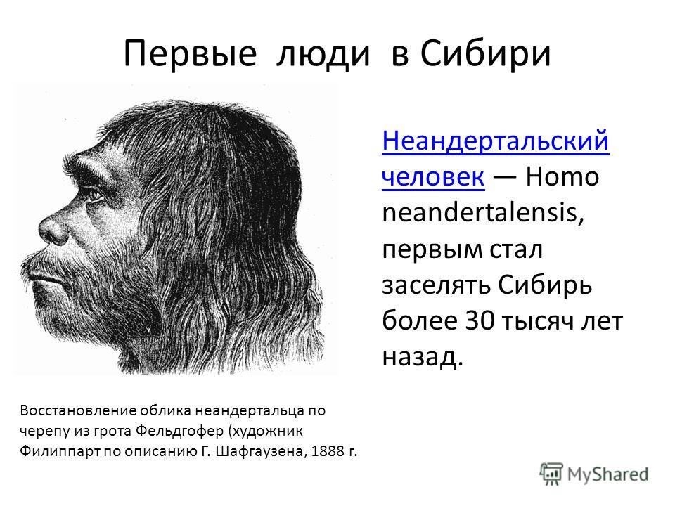 Первые люди в Сибири Неандертальский человек Неандертальский человек Homo neandertalensis, первым стал заселять Сибирь более 30 тысяч лет назад. Восстановление облика неандертальца по черепу из грота Фельдгофер (художник Филиппарт по описанию Г. Шафг