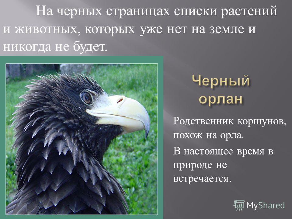 Родственник коршунов, похож на орла. В настоящее время в природе не встречается. На черных страницах списки растений и животных, которых уже нет на земле и никогда не будет.