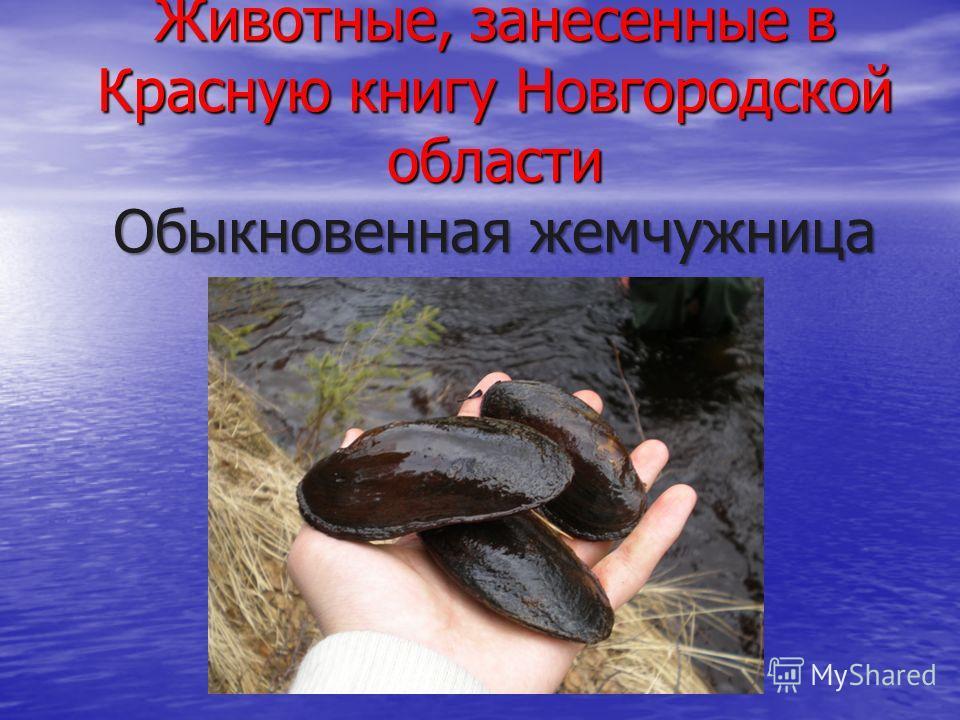 Животные, занесенные в Красную книгу Новгородской области Обыкновенная жемчужница