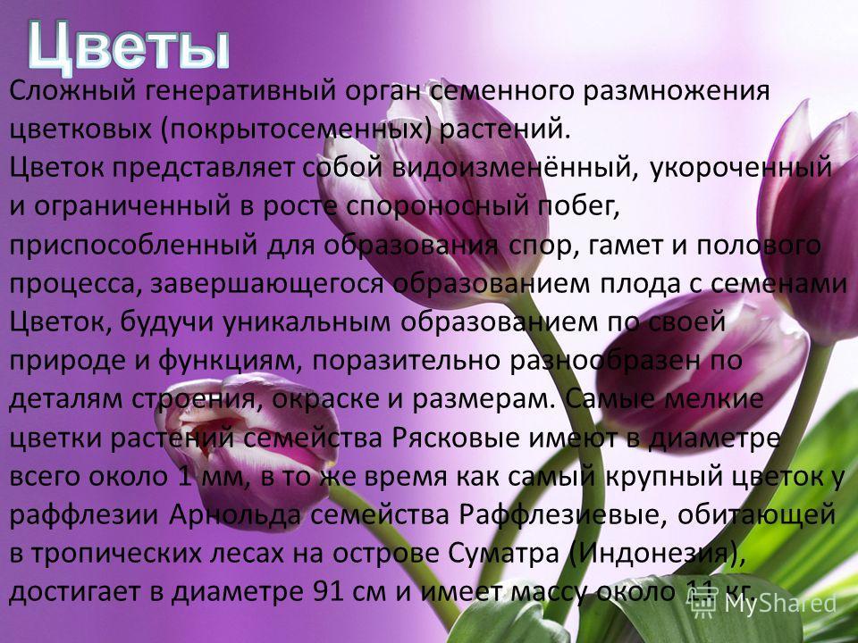 Сложный генеративный орган семенного размножения цветковых (покрытосеменных) растений. Цветок представляет собой видоизменённый, укороченный и ограниченный в росте спороносный побег, приспособленный для образования спор, гамет и полового процесса, за