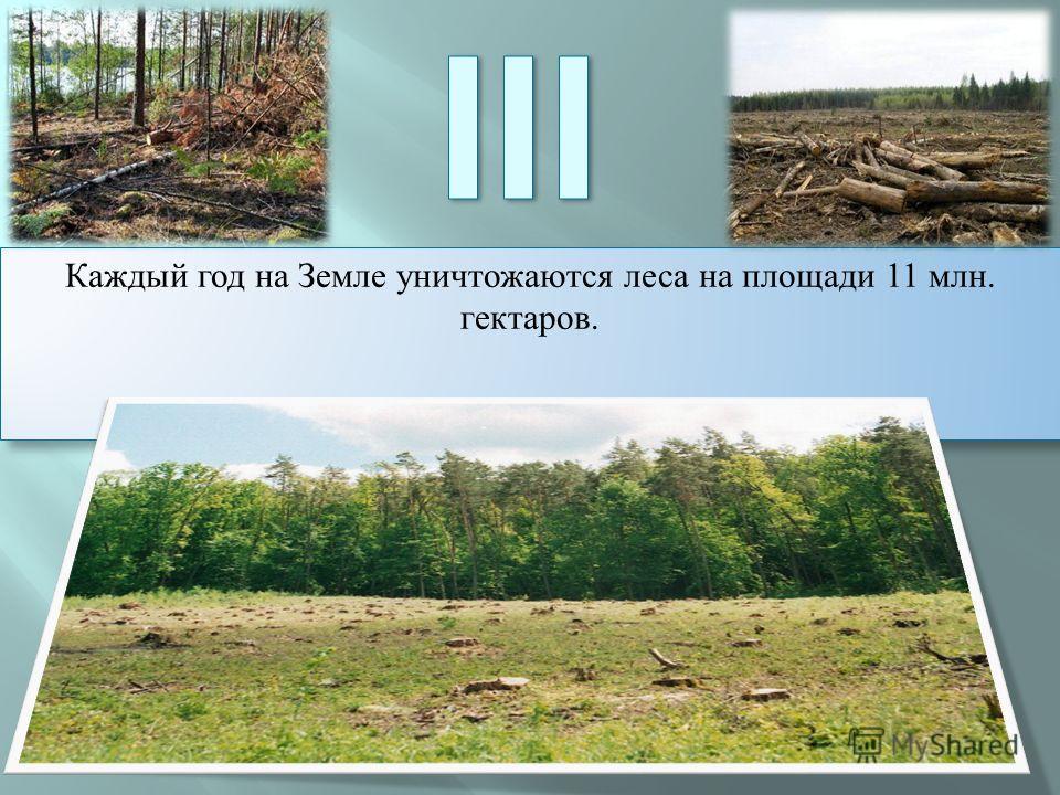 Каждый год на Земле уничтожаются леса на площади 11 млн. гектаров.