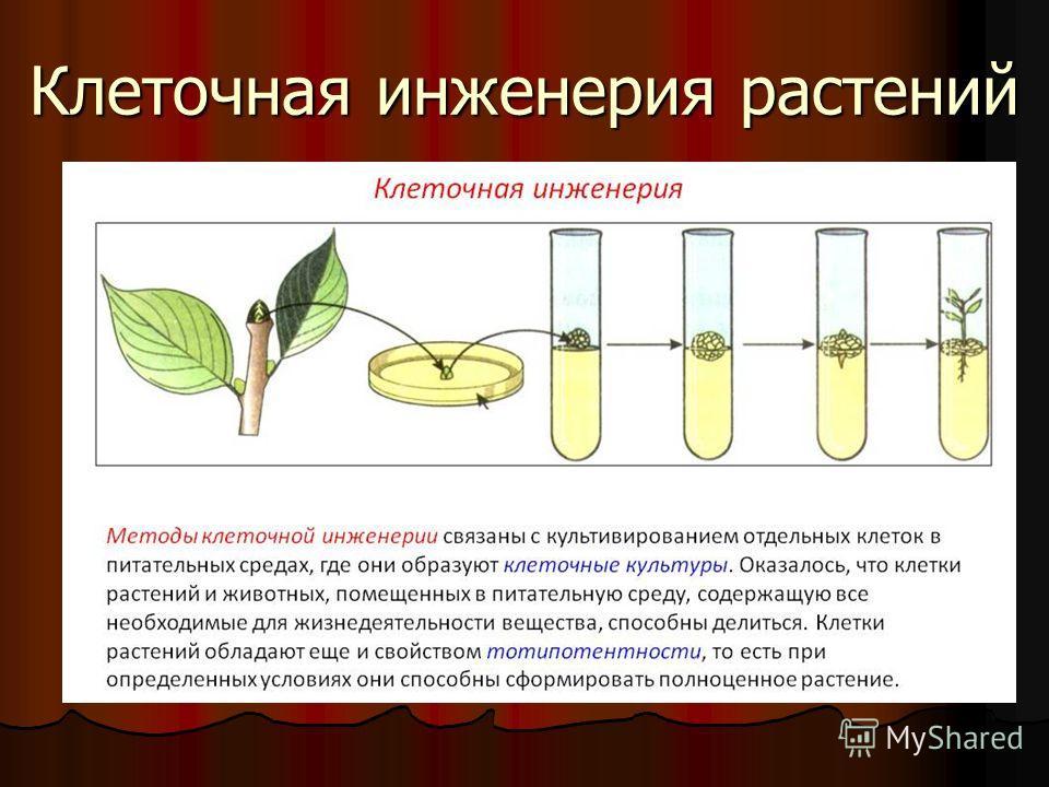Клеточная инженерия растений