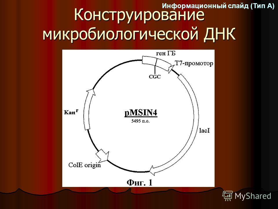 Конструирование микробиологической ДНК Информационный слайд (Тип А)
