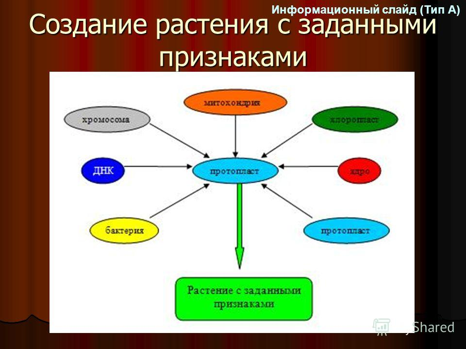Создание растения с заданными признаками Информационный слайд (Тип А)