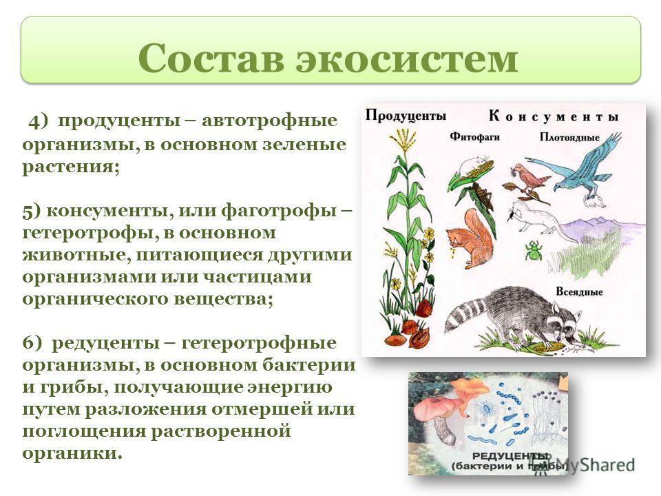 Состав экосистем 4) продуценты – автотрофные организмы, в основном зеленые растения; 5) консументы, или фаготрофы – гетеротрофы, в основном животные, питающиеся другими организмами или частицами органического вещества; 6) редуценты – гетеротрофные ор