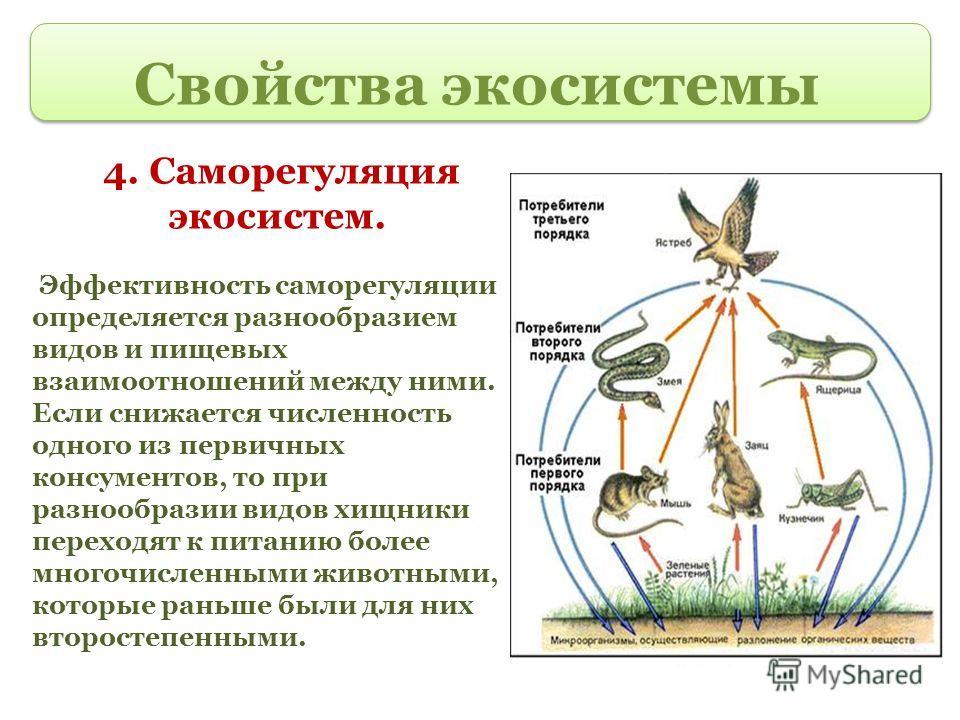 Свойства экосистемы 4. Саморегуляция экосистем. Эффективность саморегуляции определяется разнообразием видов и пищевых взаимоотношений между ними. Если снижается численность одного из первичных консументов, то при разнообразии видов хищники переходят