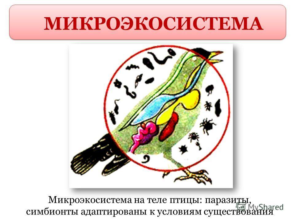 МИКРОЭКОСИСТЕМА Микроэкосистема на теле птицы: паразиты, симбионты адаптированы к условиям существования