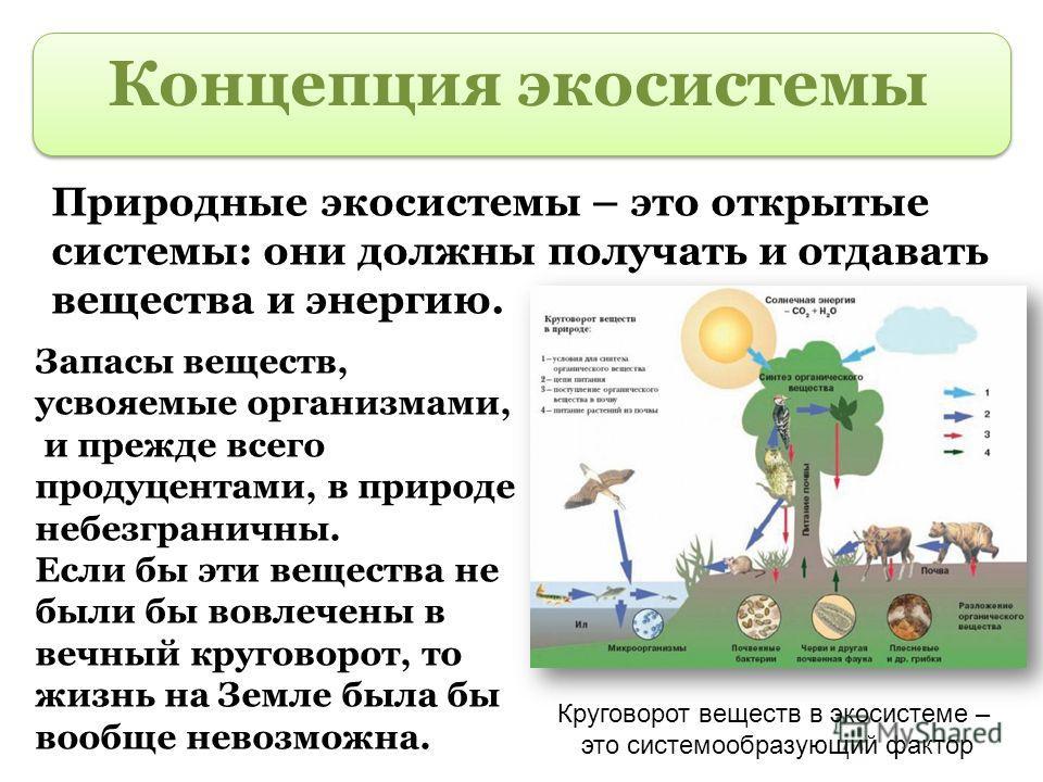 Концепция экосистемы Природные экосистемы – это открытые системы: они должны получать и отдавать вещества и энергию. Запасы веществ, усвояемые организмами, и прежде всего продуцентами, в природе небезграничны. Если бы эти вещества не были бы вовлечен