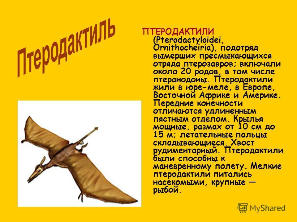 ПТЕРОДАКТИЛИ (Pterodactyloidei, Ornithocheiria), подотряд вымерших пресмыкающихся отряда птерозавров; включали около 20 родов, в том числе птеранодоны. Птеродактили жили в юре-меле, в Европе, Восточной Африке и Америке. Передние конечности отличаются