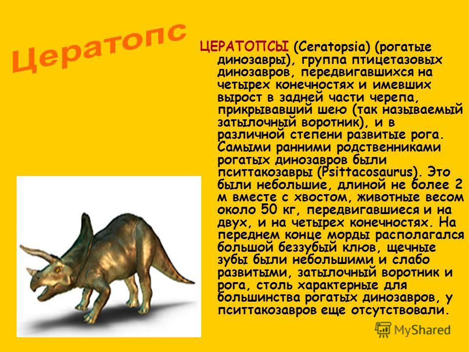 ЦЕРАТОПСЫ (Ceratopsia) (рогатые динозавры), группа птицетазовых динозавров, передвигавшихся на четырех конечностях и имевших вырост в задней части черепа, прикрывавший шею (так называемый затылочный воротник), и в различной степени развитые рога. Сам