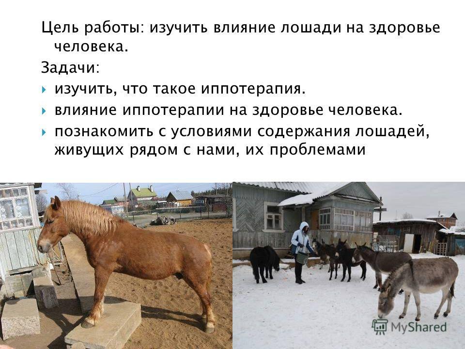 Цель работы: изучить влияние лошади на здоровье человека. Задачи: изучить, что такое иппотерапия. влияние иппотерапии на здоровье человека. познакомить с условиями содержания лошадей, живущих рядом с нами, их проблемами
