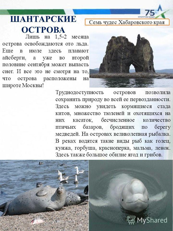 Семь чудес Хабаровского края Лишь на 1,5-2 месяца острова освобождаются ото льда. Еще в июле здесь плавают айсберги, а уже во второй половине сентября может выпасть снег. И все это не смотря на то, что острова расположены на широте Москвы! Труднодост