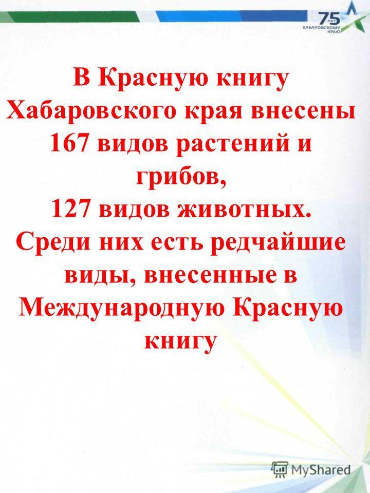 В Красную книгу Хабаровского края внесены 167 видов растений и грибов, 127 видов животных. Среди них есть редчайшие виды, внесенные в Международную Красную книгу