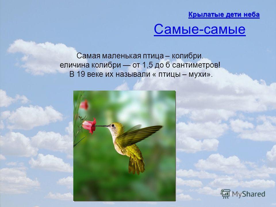 Самая маленькая птица – колибри. еличина колибри от 1,5 до б сантиметров! В 19 веке их называли « птицы – мухи». Самые-самые Крылатые дети неба Крылатые дети неба