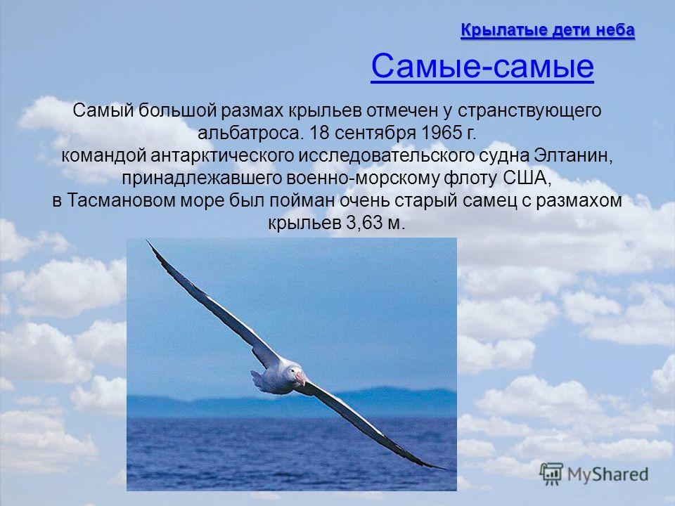Самый большой размах крыльев отмечен у странствующего альбатроса. 18 сентября 1965 г. командой антарктического исследовательского судна Элтанин, принадлежавшего военно-морскому флоту США, в Тасмановом море был пойман очень старый самец с размахом кры