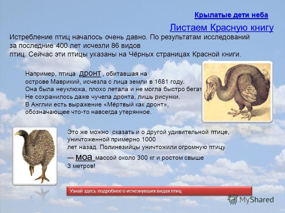 Истребление птиц началось очень давно. По результатам исследований за последние 400 лет исчезли 86 видов птиц. Сейчас эти птицы указаны на Чёрных страницах Красной книги. Например, птица дронт, обитавшая на острове Маврикий, исчезла с лица земли в 16