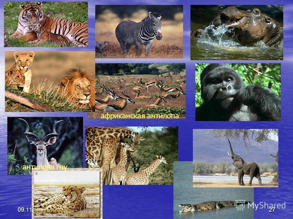 09.11.201427 африканская антилопа антилопа гну