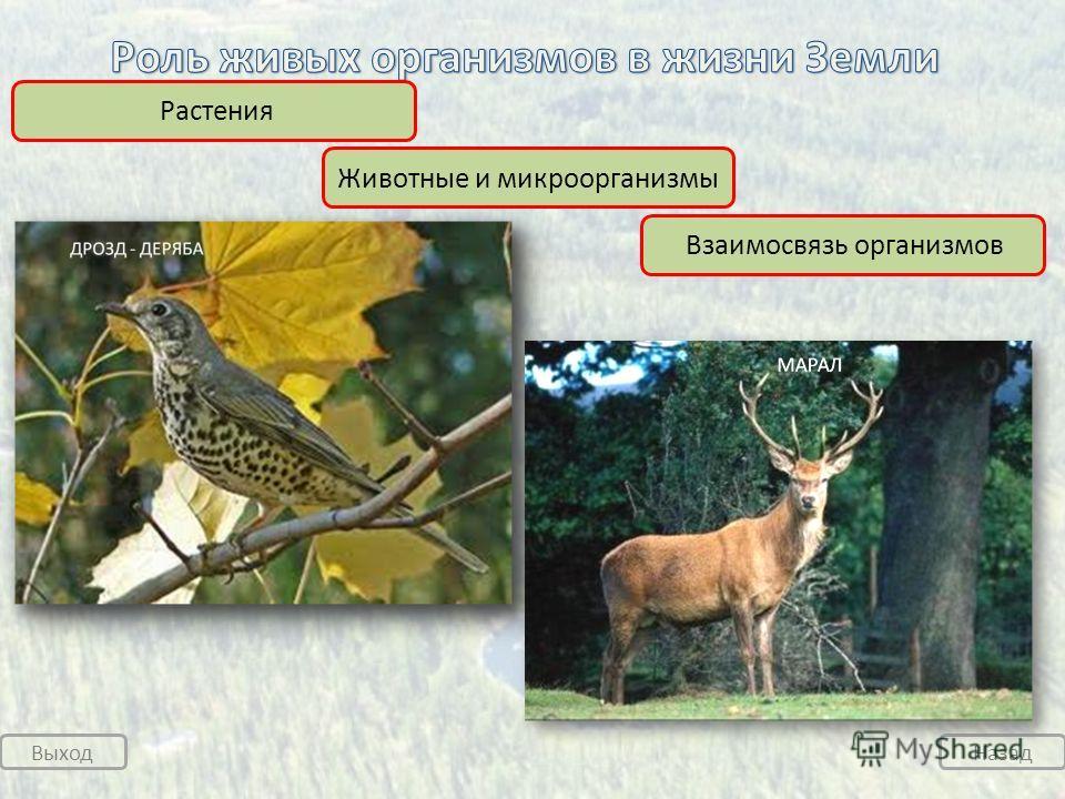 Выход Назад Растения Животные и микроорганизмы Взаимосвязь организмов