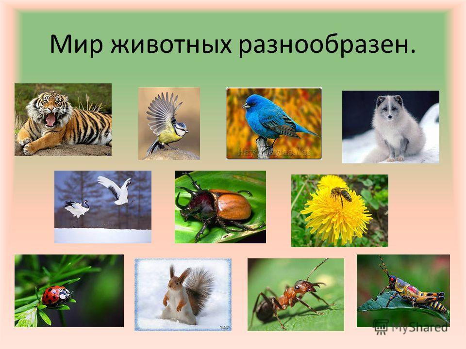 Мир животных разнообразен.