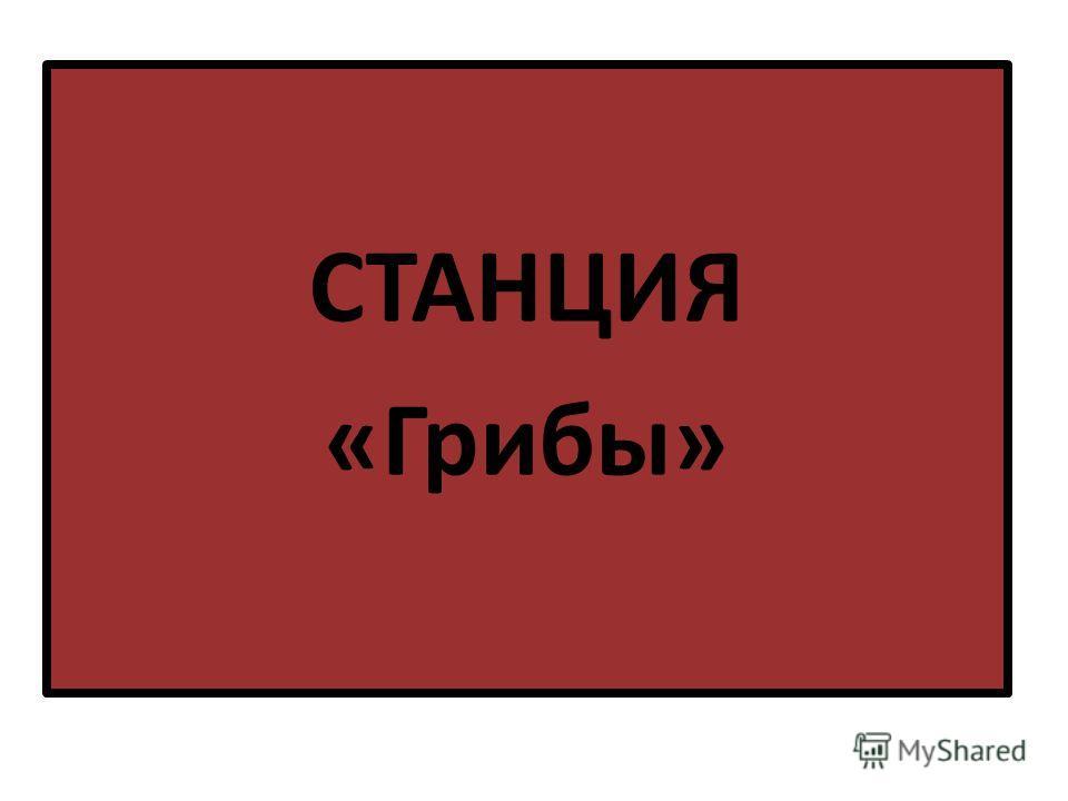 СТАНЦИЯ «Грибы»