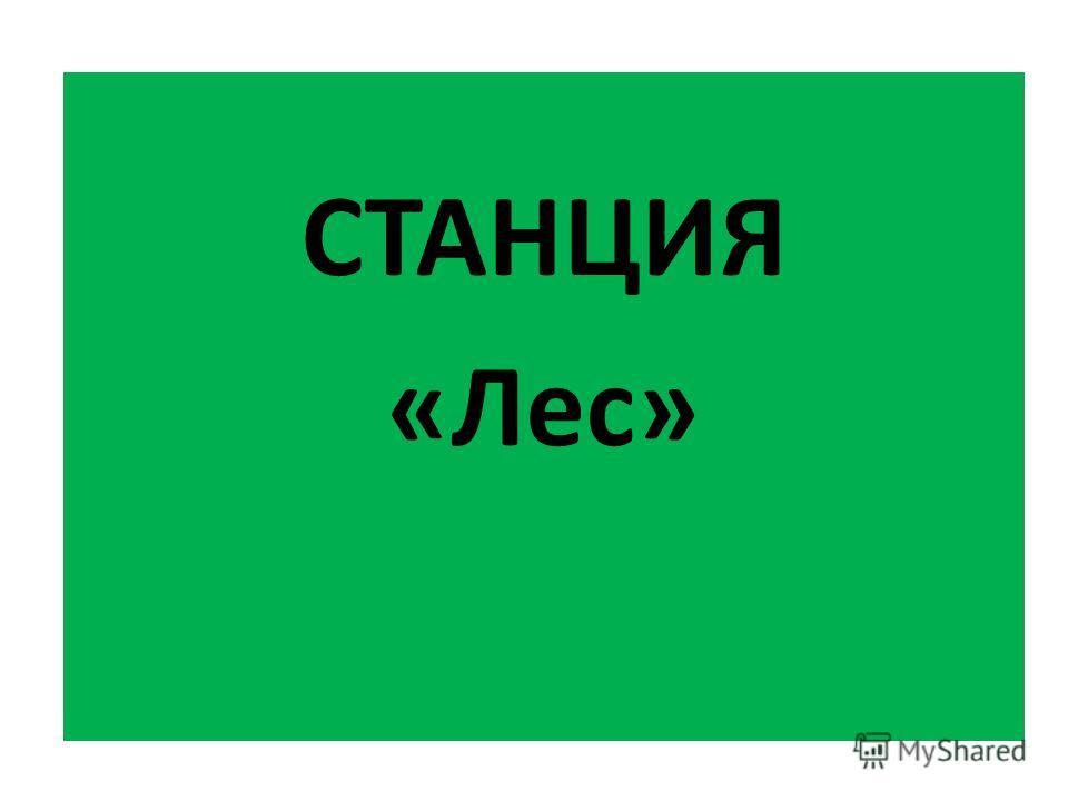 СТАНЦИЯ «Лес»