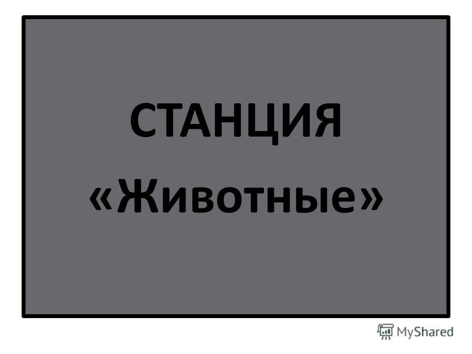 СТАНЦИЯ «Животные»