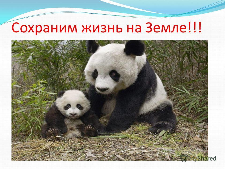 Сохраним жизнь на Земле!!!