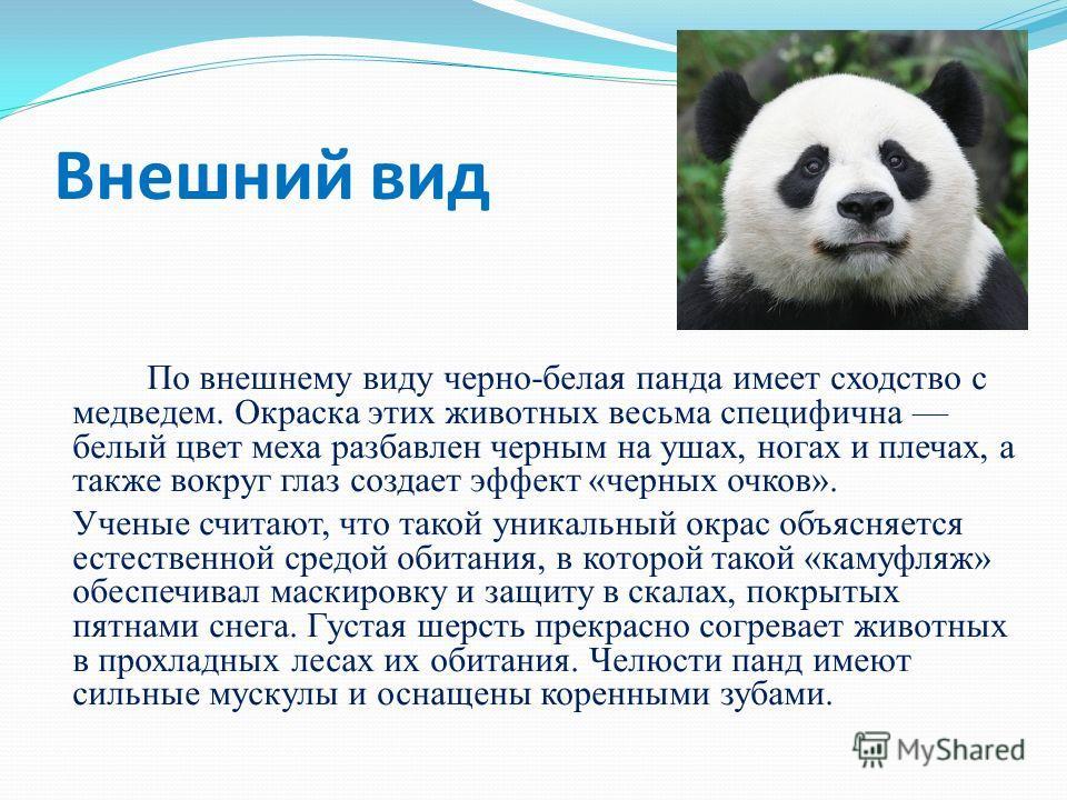 Внешний вид По внешнему виду черно-белая панда имеет сходство с медведем. Окраска этих животных весьма специфична белый цвет меха разбавлен черным на ушах, ногах и плечах, а также вокруг глаз создает эффект «черных очков». Ученые считают, что такой у