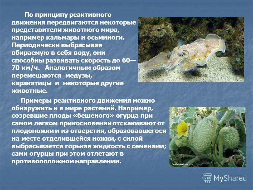 По принципу реактивного движения передвигаются некоторые представители животного мира, например кальмары и осьминоги. Периодически выбрасывая вбираемую в себя воду, они способны развивать скорость до 60 70 км/ч. Аналогичным образом перемещаются меду
