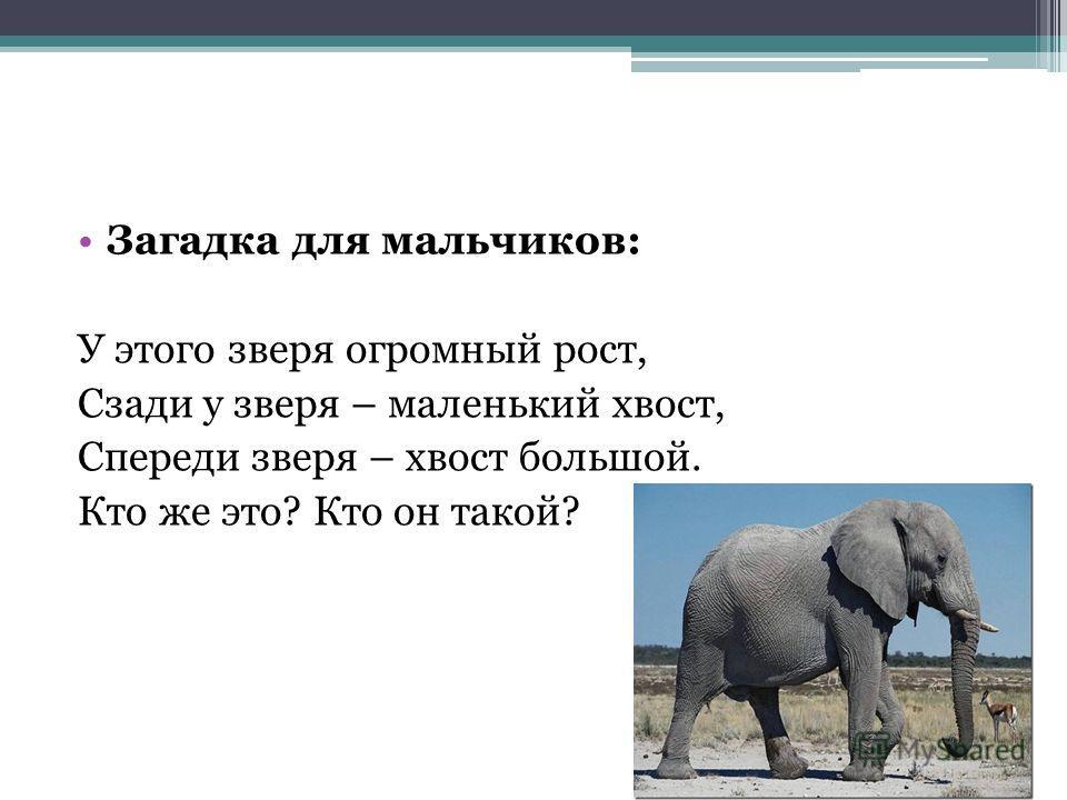 Загадка для мальчиков: У этого зверя огромный рост, Сзади у зверя – маленький хвост, Спереди зверя – хвост большой. Кто же это? Кто он такой?