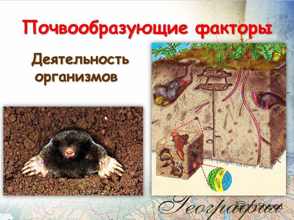 Деятельность организмов Деятельность организмов Почвообразующие факторы