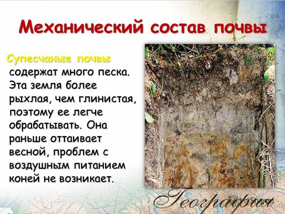 Супесчаные почвы содержат много песка. Эта земля более рыхлая, чем глинистая, поэтому ее легче обрабатывать. Она раньше оттаивает весной, проблем с воздушным питанием коней не возникает. Механический состав почвы