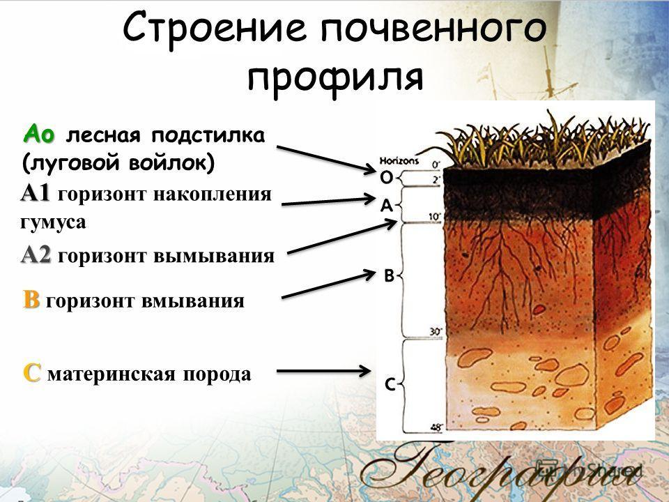 Строение почвенного профиля Аo Аo лесная подстилка (луговой войлок) А1 А1 горизонт накопления гумуса А2 А2 горизонт вымывания В В горизонт вмывания С С материнская порода