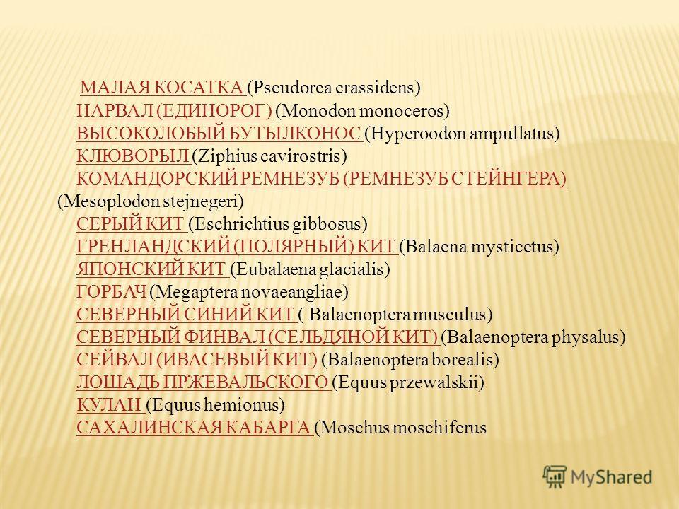 МАЛАЯ КОСАТКА (Pseudorca crassidens) НАРВАЛ (ЕДИНОРОГ) (Monodon monoceros) ВЫСОКОЛОБЫЙ БУТЫЛКОНОС (Hyperoodon ampullatus) КЛЮВОРЫЛ (Ziphius cavirostris) КОМАНДОРСКИЙ РЕМНЕЗУБ (РЕМНЕЗУБ СТЕЙНГЕРА) (Mesoplodon stejnegeri) СЕРЫЙ КИТ (Eschrichtius gibbos