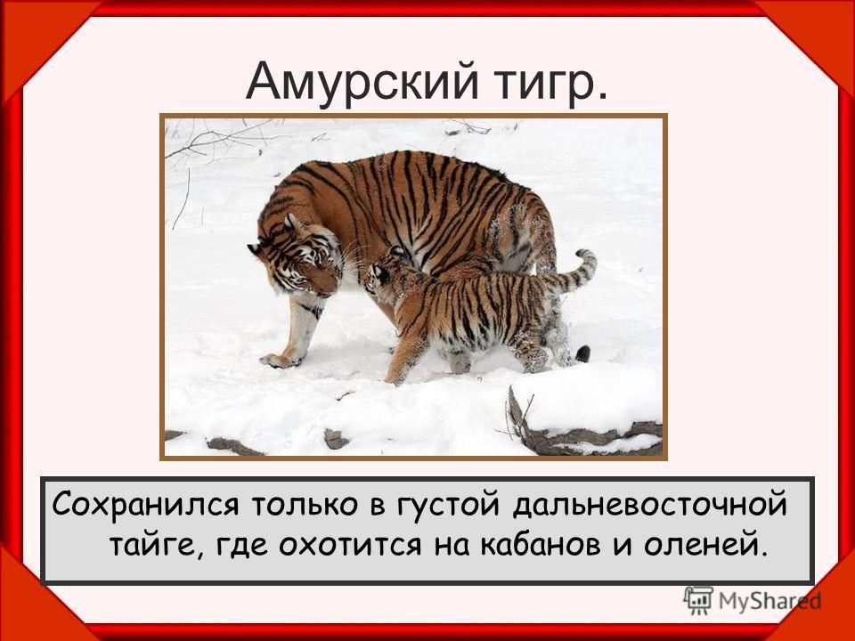 Очень редкий ночной зверь. Обитает в пустынных местах Средней Азии и в Закавказье. Питается чем придётся, ловит черепах, а летом приходит на бахчи, где ест арбузы и дыни. Полосатая гиена.