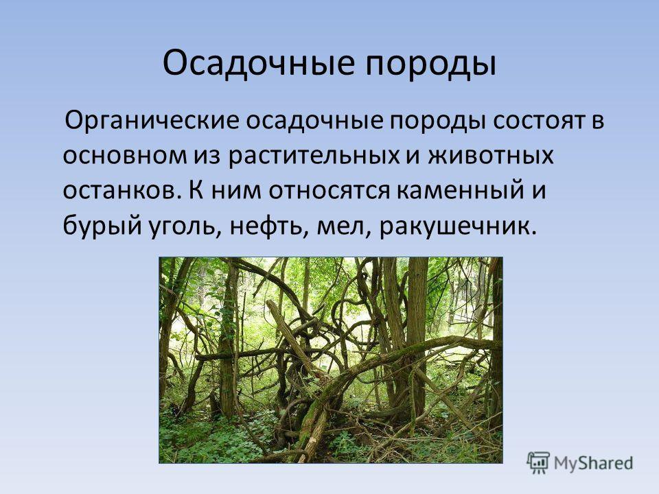 Осадочные породы Органические осадочные породы состоят в основном из растительных и животных останков. К ним относятся каменный и бурый уголь, нефть, мел, ракушечник.