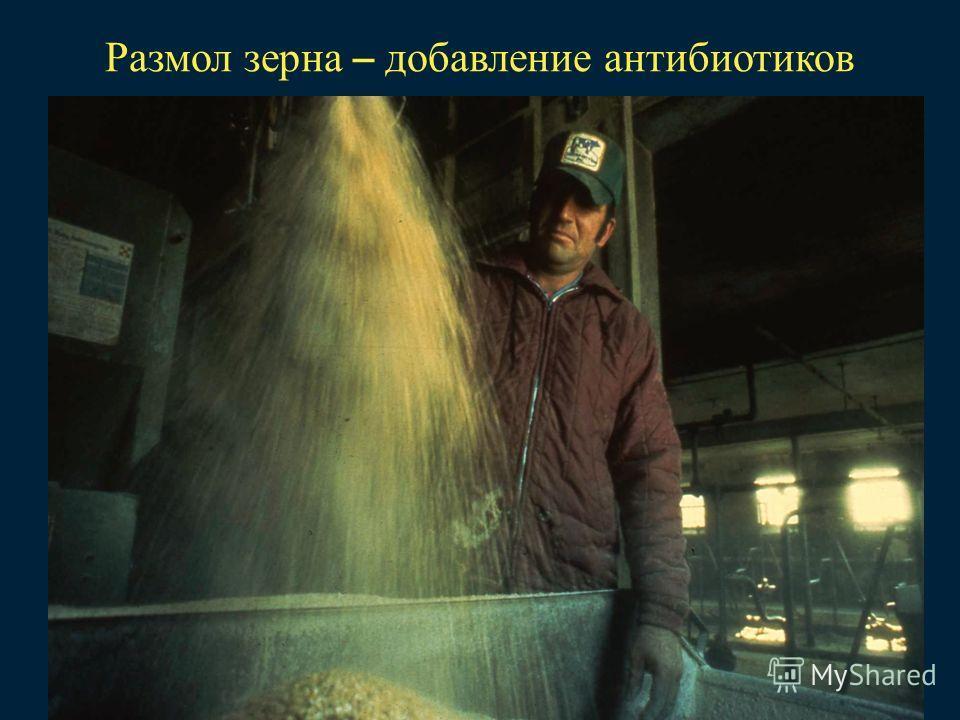 Размол зерна – добавление антибиотиков