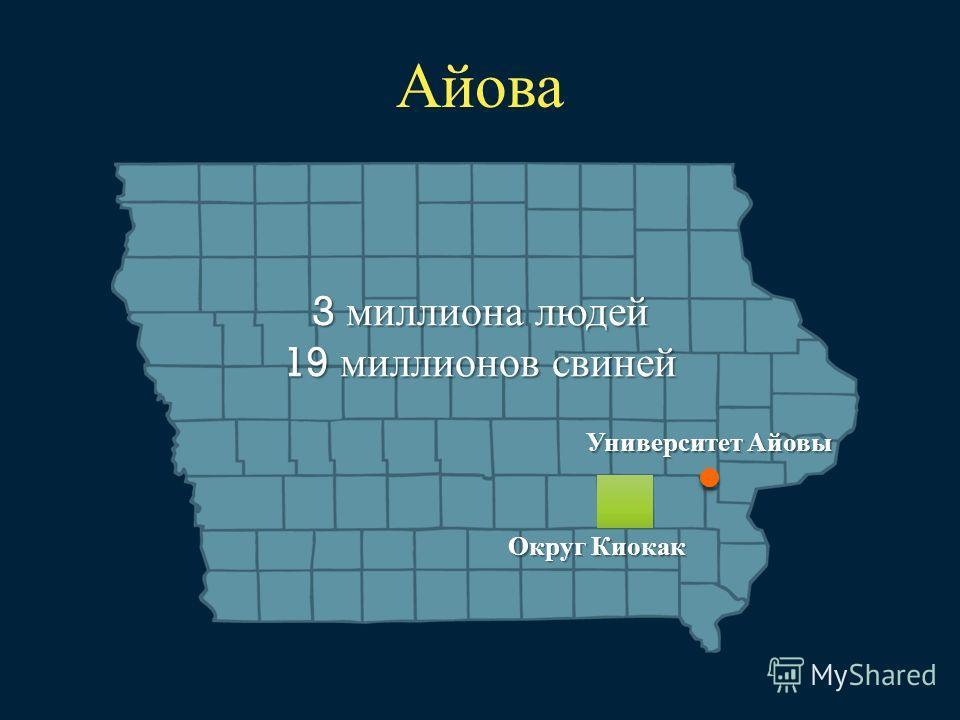 Университет Айовы Округ Киокак 3 миллиона людей 19 миллионов свиней Айова