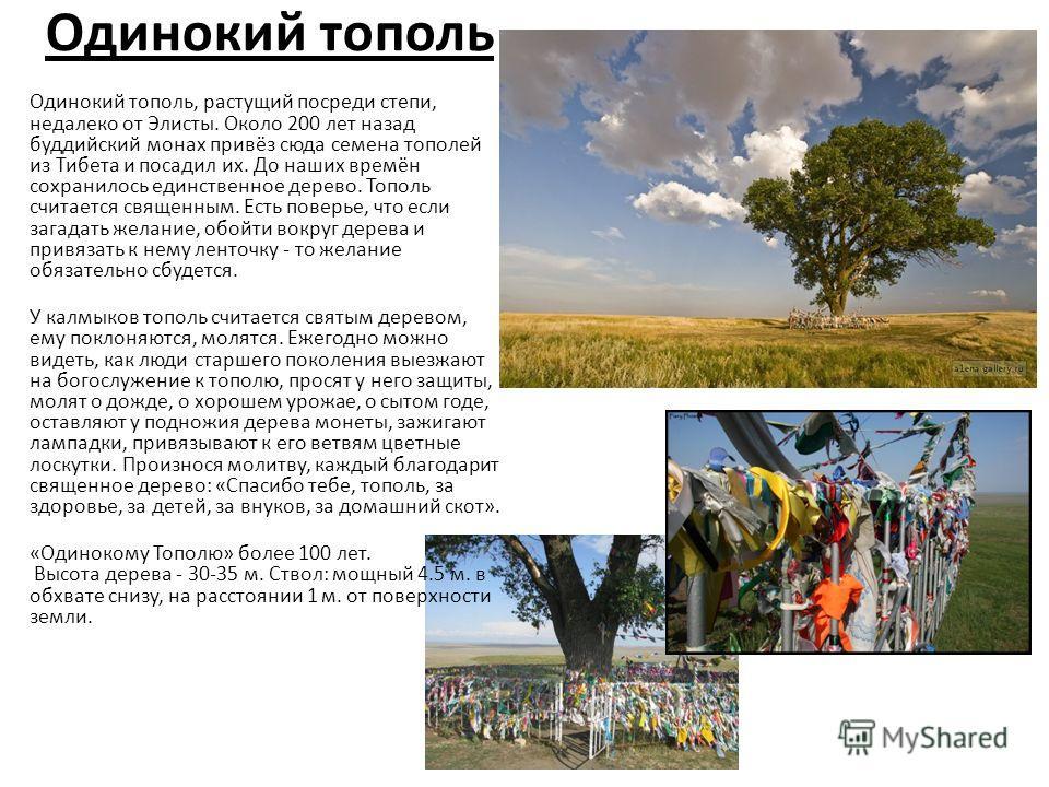 Одинокий тополь Одинокий тополь, растущий посреди степи, недалеко от Элисты. Около 200 лет назад буддийский монах привёз сюда семена тополей из Тибета и посадил их. До наших времён сохранилось единственное дерево. Тополь считается священным. Есть пов