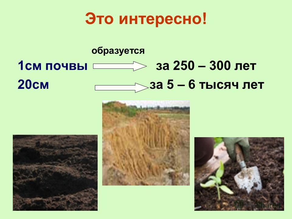 Это интересно! 1см почвы за 250 – 300 лет 20см за 5 – 6 тысяч лет образуется