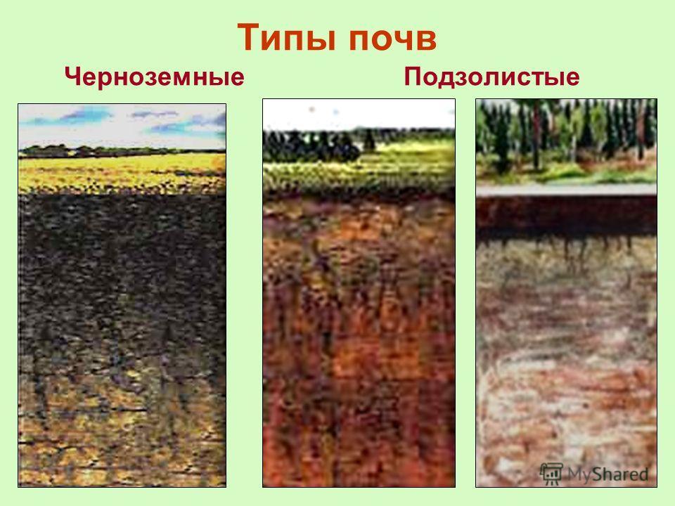 Типы почв ЧерноземныеПодзолистые