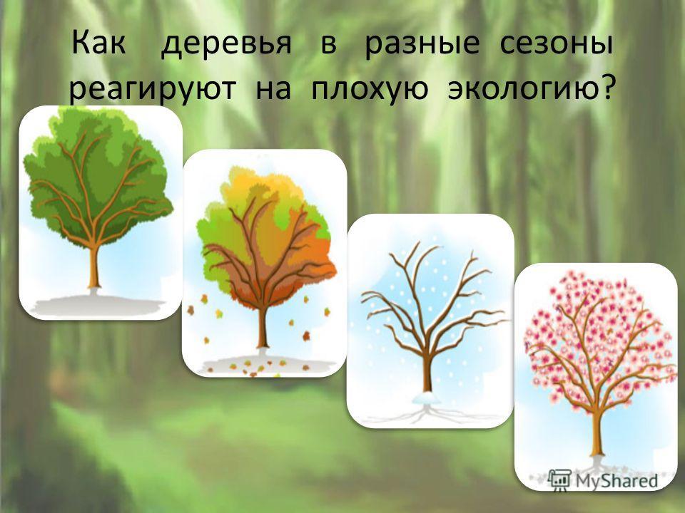Как деревья в разные сезоны реагируют на плохую экологию?