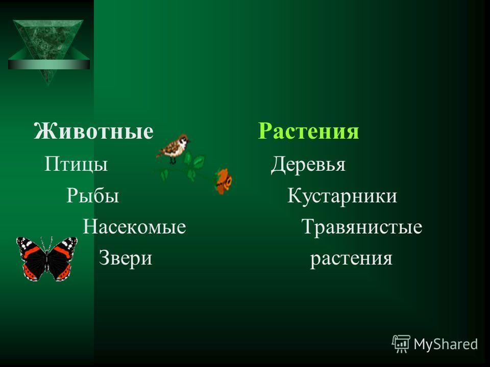 Животные Растения Птицы Деревья Рыбы Кустарники Насекомые Травянистые Звери растения