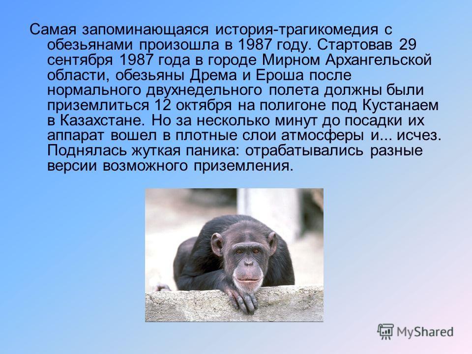 В советской космонавтике долгое время использовались только собаки. Обезьяны приняли космическую эстафету в 1989 году. Шимпанзе в полет не отправляли: тяжелы и капризны. Летали у нас только макаки-резус, все -- из Сухумского заповедника. Летали по дв